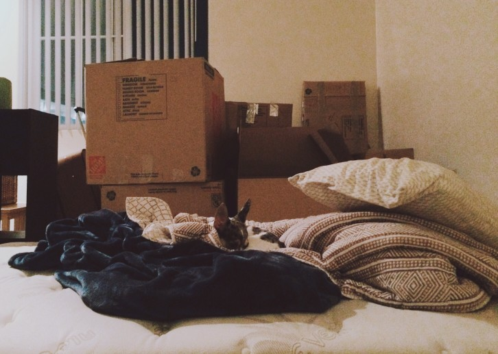 moving-boxes-and-a-lazy-pup_t20_dpPBxJ.jpg