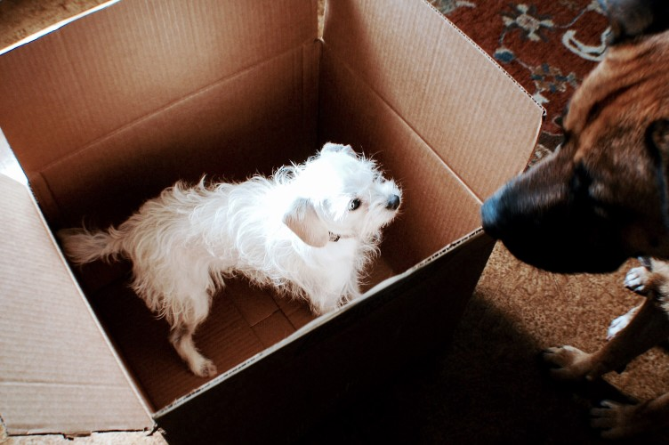 puppy-in-moving-box_t20_Zzr4lN.jpg