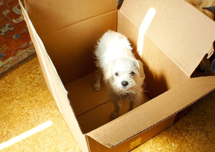 puppy in a box